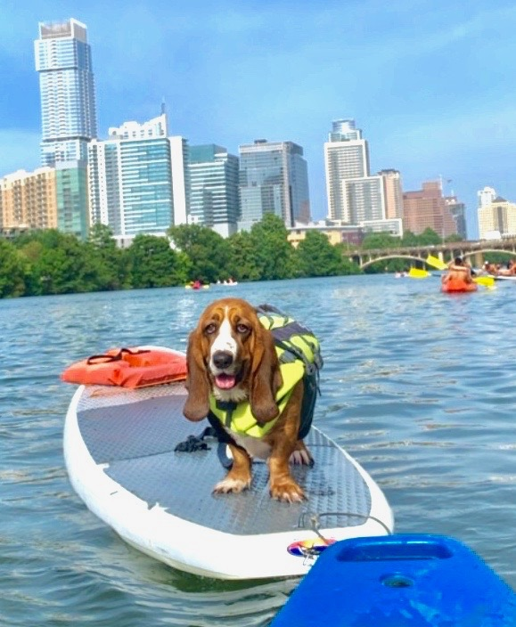 dog on a stand-up paddle-board in Lady Bird Lake.